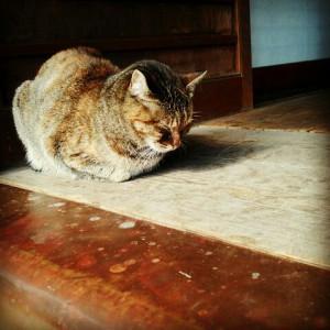 賽銭箱の横でお昼寝中のネコに癒されました