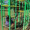 子どもの運動能力を上げるコツは外遊び